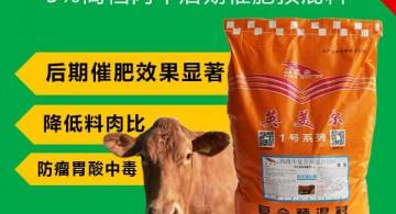 西门塔尔育肥牛 怎样喂养肉牛长的更快