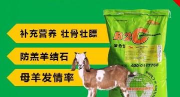 养羊7注意 肉羊预混料 牛喂什么饲料长得更快